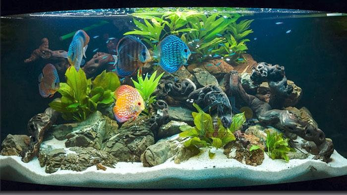 fish aquarium for home